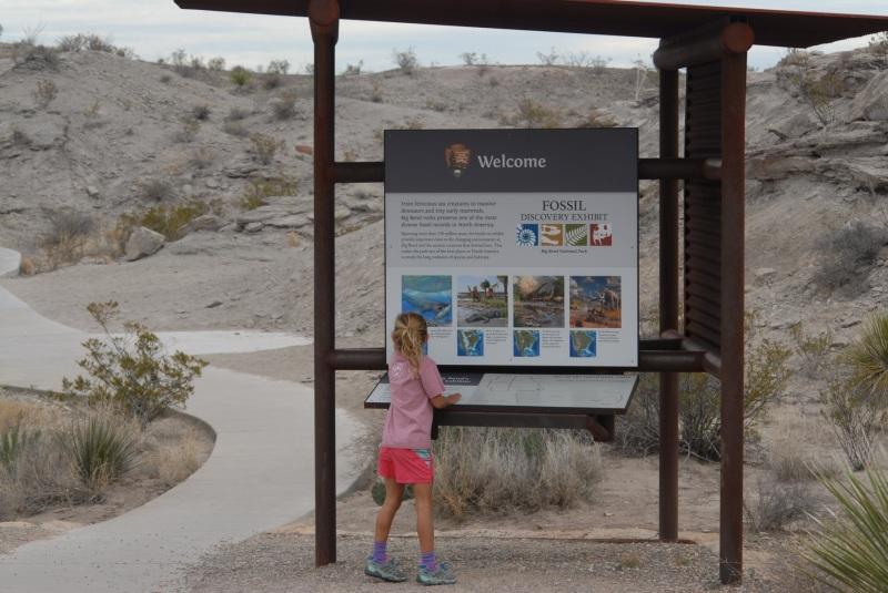 Fossil bone exhibit