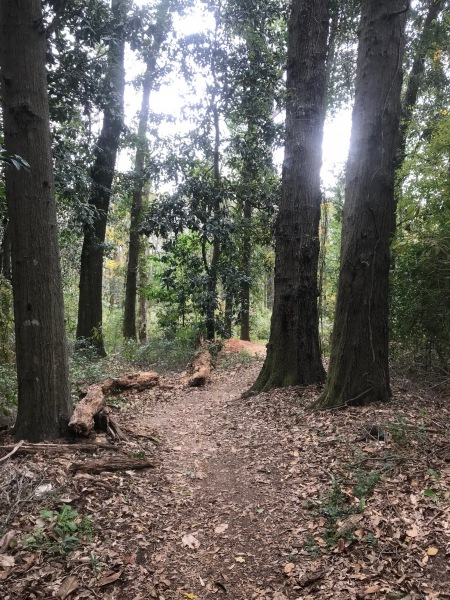 Forever Wild Trails