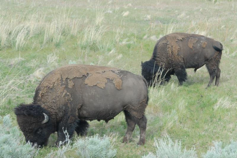 Antelope State Park