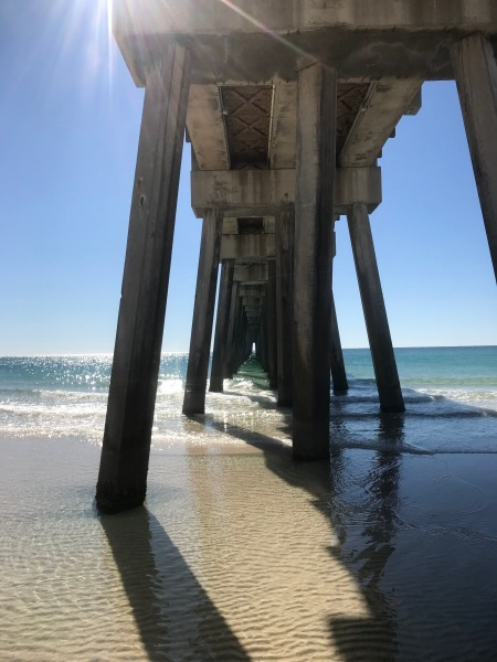 The Dog Beach
